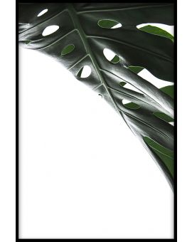 Monstera Close Up N01 Poster